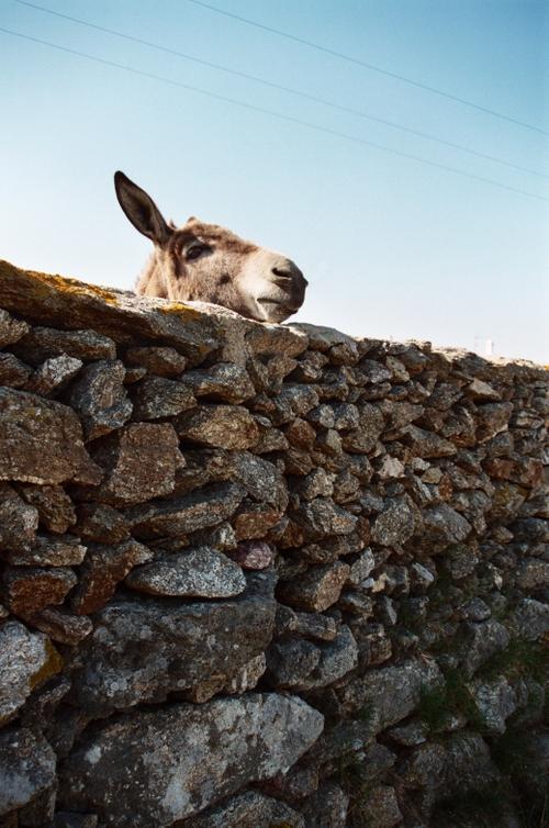 Donkey, Mykonos