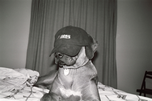 """Always wear your hat - don't let it wear you."" - Julia Michaelis"